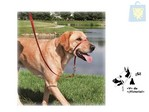 PET'S WORLD - COLLAR DE ENTRENAMIENTO EASY WALK (Talla S,M y L)