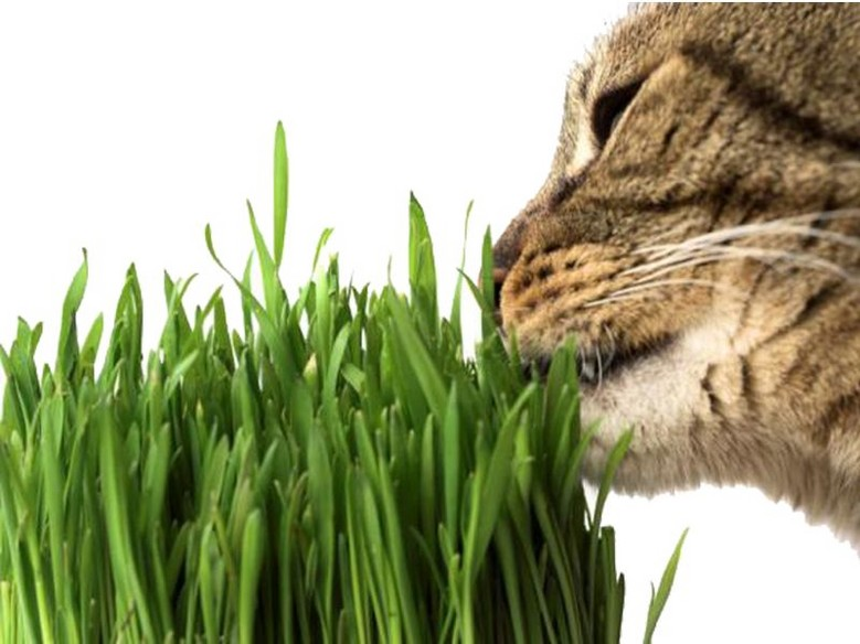 GRASS FORD CATS AND RODENTS (150g)
