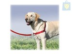 PET'S WORLD - ARNES DE ENTRENAMIENTO EASY WALK (Varias tallas)