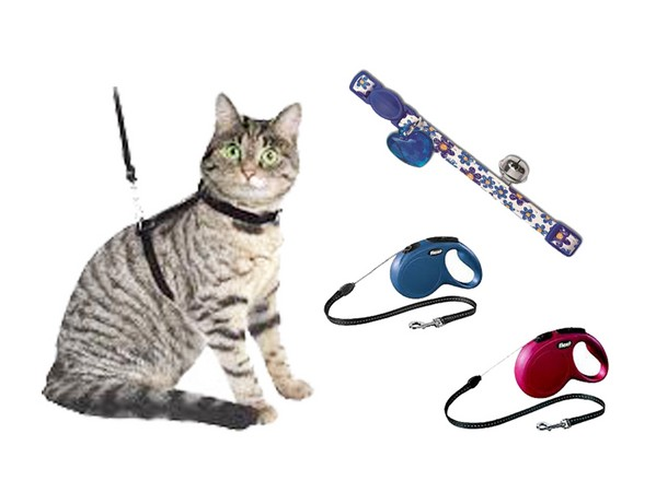 Correas, Collares y Arneses para Gatos