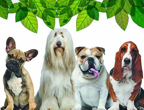 Dogs para Natural / Ecological