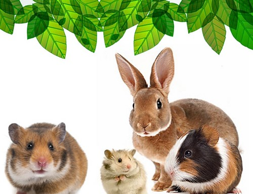 Rodents and Ferrets para Natural / Ecological