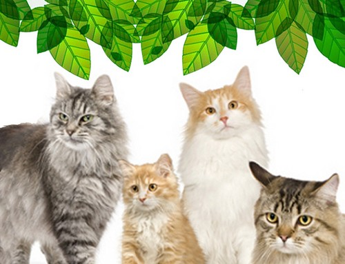 Cats para Natural / Ecological